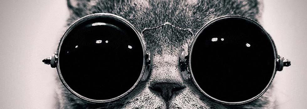 gatto_occhiali